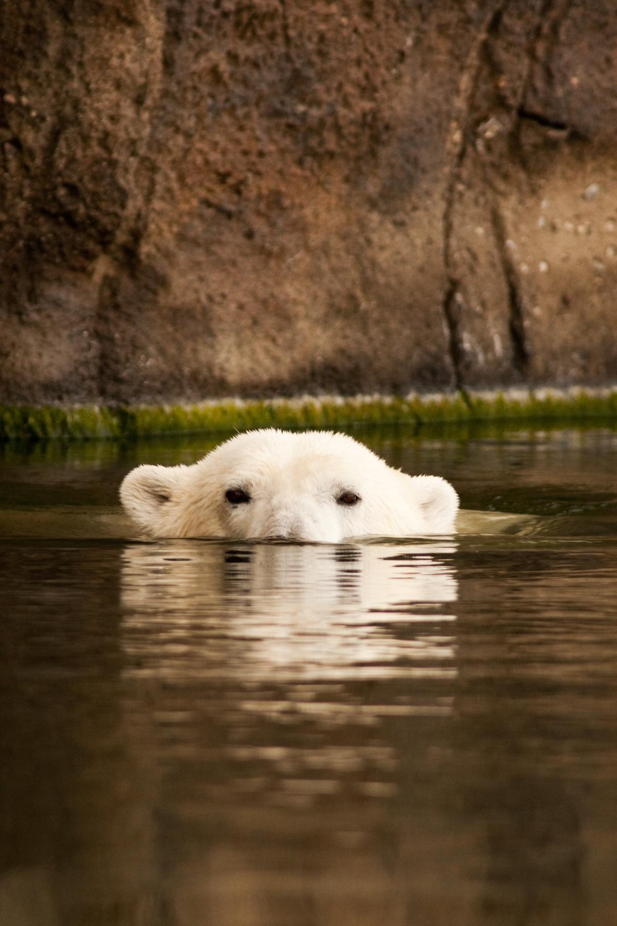 freek in het wild ijsberen